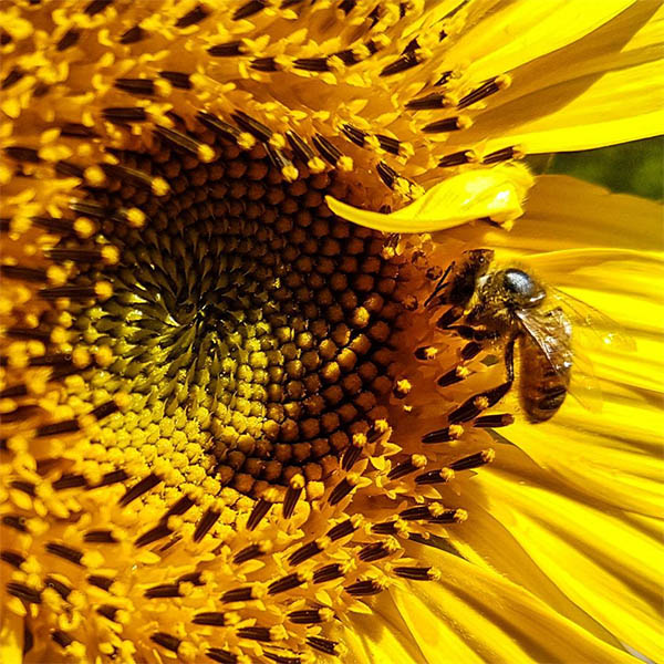 11 unbelievable facts about bees