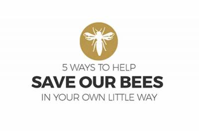 5 ways to help save bees banner