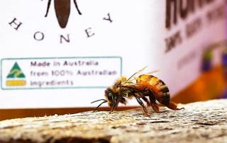 sydney honeybee in front of australian honey jar-min