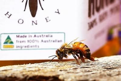 sydney honeybee in front of australian honey jar-min