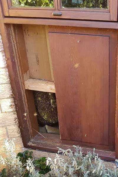 honey bee nest in between wood panels under a bay window wide shot