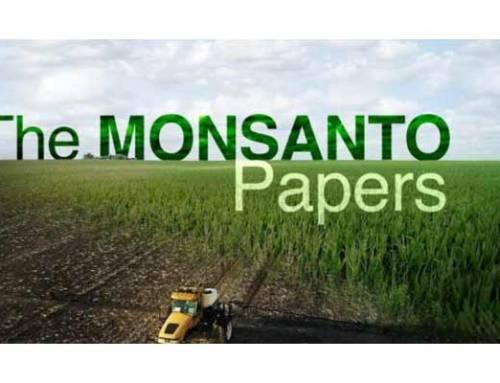 Four Corners investigates Monsanto