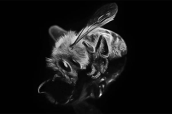 help-save-our-bees-dead-bee-on-black-background