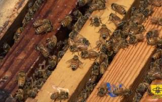 spring-management-in-beekeeping-a-close-up-shot-of-a-brood-box.jpg
