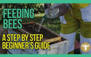 Feeding-Bees-A-Step-by-Step-Beginners-Guide-with-Bruce-White