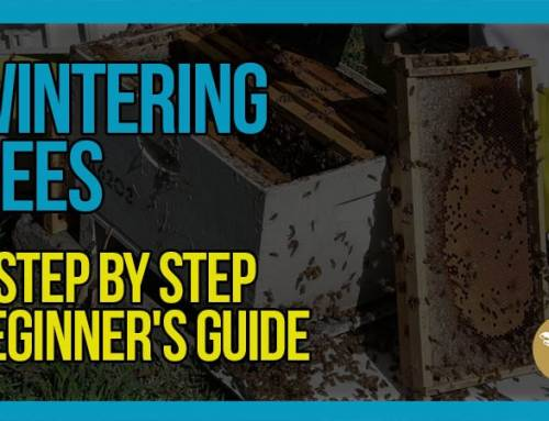 Wintering Bees A Step by Step Beginner's Guide with Bruce White