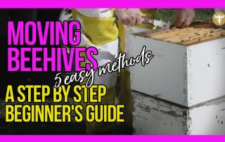 moving-beehives-5-easy-methods