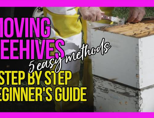 Moving Beehives 5 Easy Methods