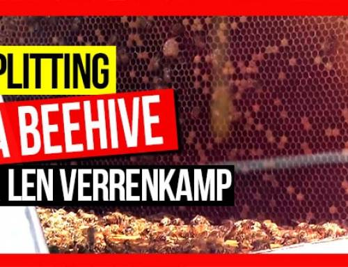 Splitting a Hive (The Beehive as a Factory) ft Len Verrenkamp | ABA of NSW Field Day 2019