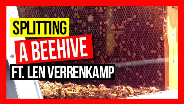 ABA-of-NSW-Field-Day-2019-Part-11-The-Beehive-as-a-Factory-Splitting-a-Hive-ft-Len-Verrenkamp-v3-web-thumbnail-min