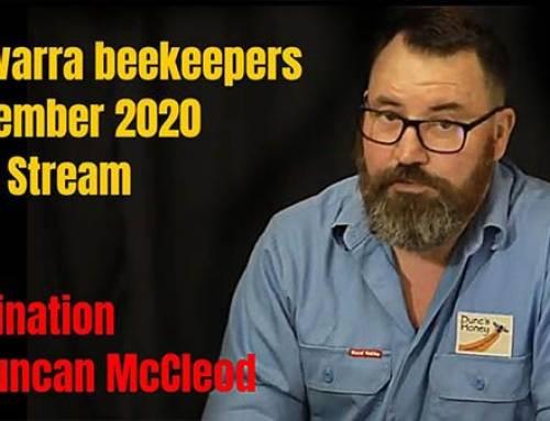 Pollination | illawarra beekeepers Live Stream November 2020