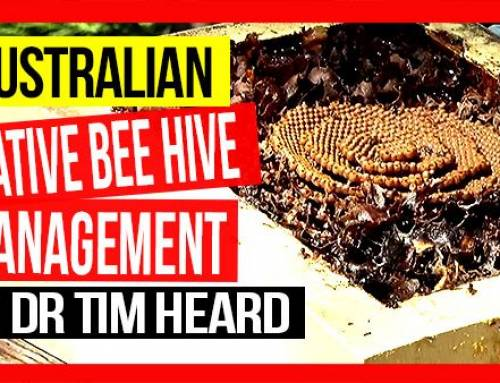 Australian Native Beehive Management ft Dr Tim Heard | ABA of NSW Field Day 2019