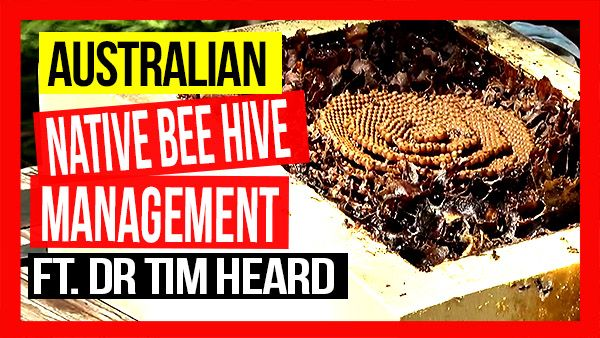 ABA-of-NSW-Field-Day-2019-Part-09-Australian-Native-Beehive-Management-ft-Dr-Tim-Heard