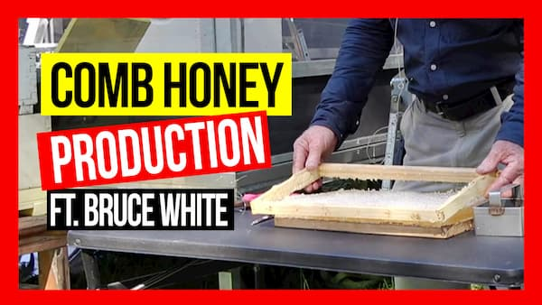 comb-honey-production-ABA-field-day7