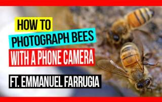 how-to-photograph-bees-with-a-phone-camera-pros-and-cons-ft-emmanuel-farrugia-ABA-NSW-Field-Day-2019-web-thumb