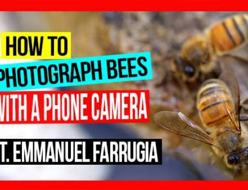 How to Photograph Bees with a Phone Camera: Pros & Cons | ABA of NSW Field Day 2019