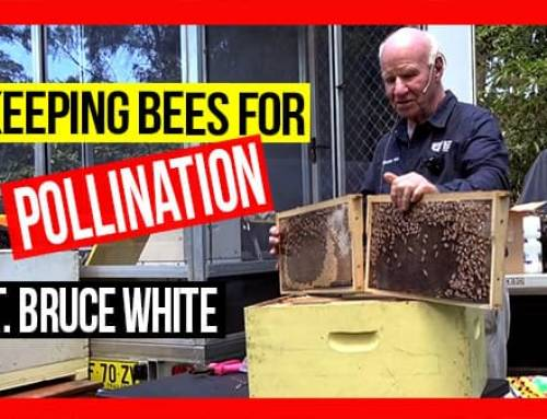 Keeping Bees for Pollination ft Bruce White | ABA of NSW Field Day 2019