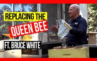 replacing-the-queen-bee-ABA-field-day-web-thumbnail