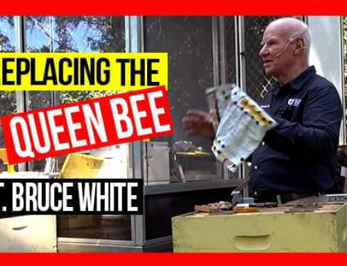 Replacing the Queen Bee in a Hive ft Bruce White | ABA of NSW Field Day 2019