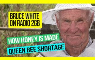 How-is-Honey-Made-and-the-Queen-Bee-Shortage-bruce-white-on-2GB-web-thumb