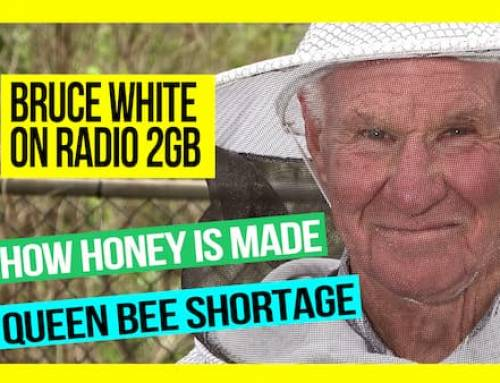 How is Honey Made and the Queen Bee Shortage