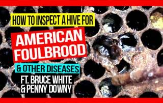 how-to-inspect-a-hive-for-AFB-and-other-diseases