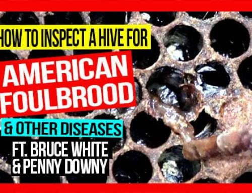 How to Inspect a Hive for American Foulbrood & Other Bee Diseases